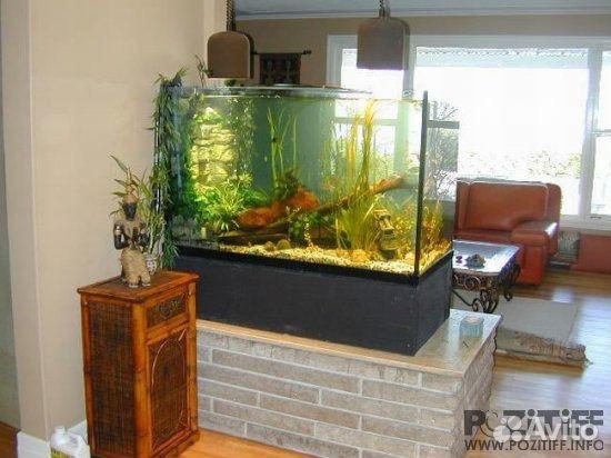Фото дизайн домашнего аквариума