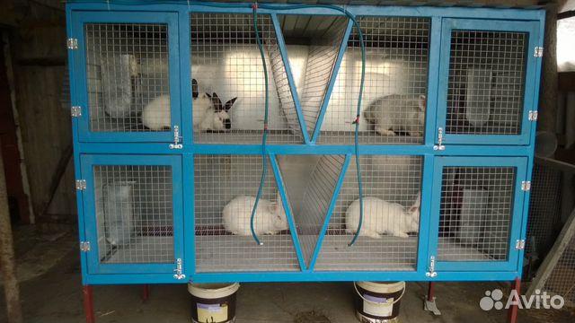 Клетка для кроликов размеры фото своими руками