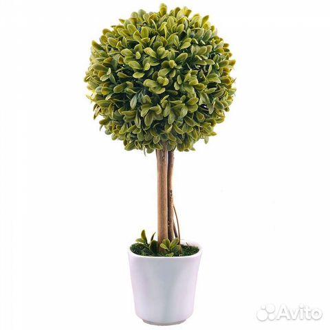 Декоративные деревья в горшке
