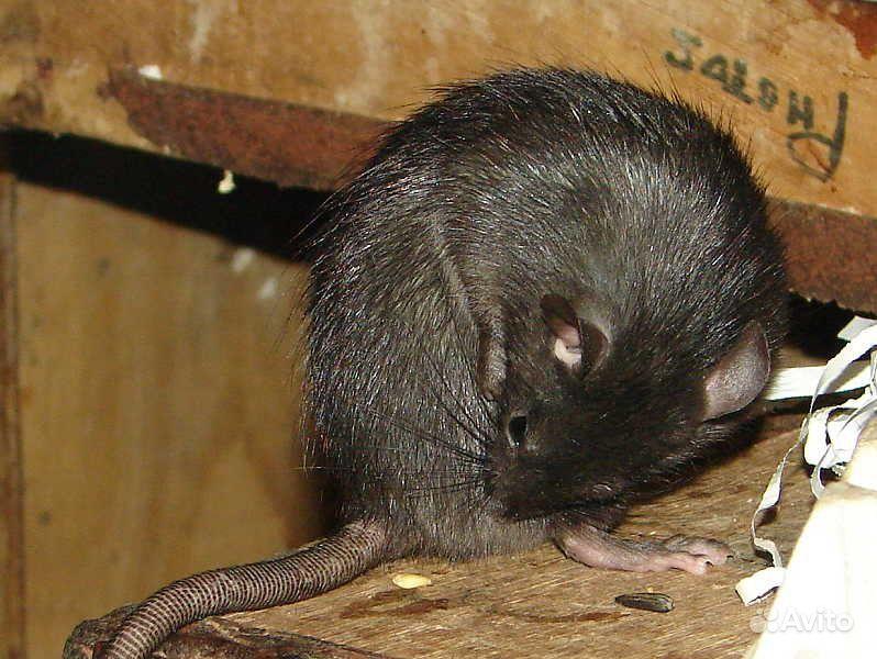 термобелье для укус крысы во сне того