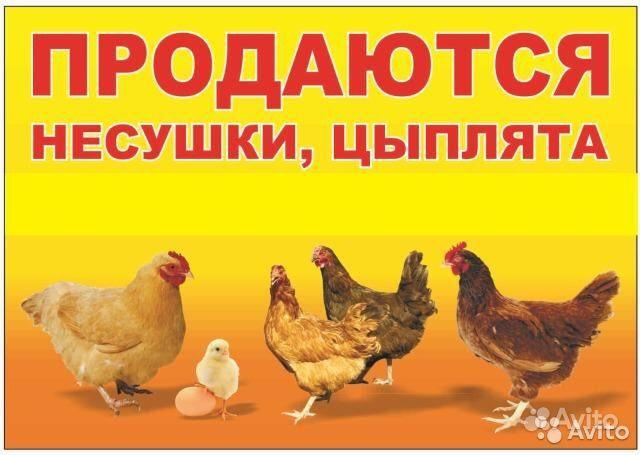 Цыплята,утята, индюшата