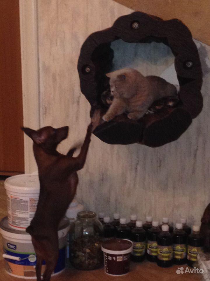 Кошкин дом эксклюзив