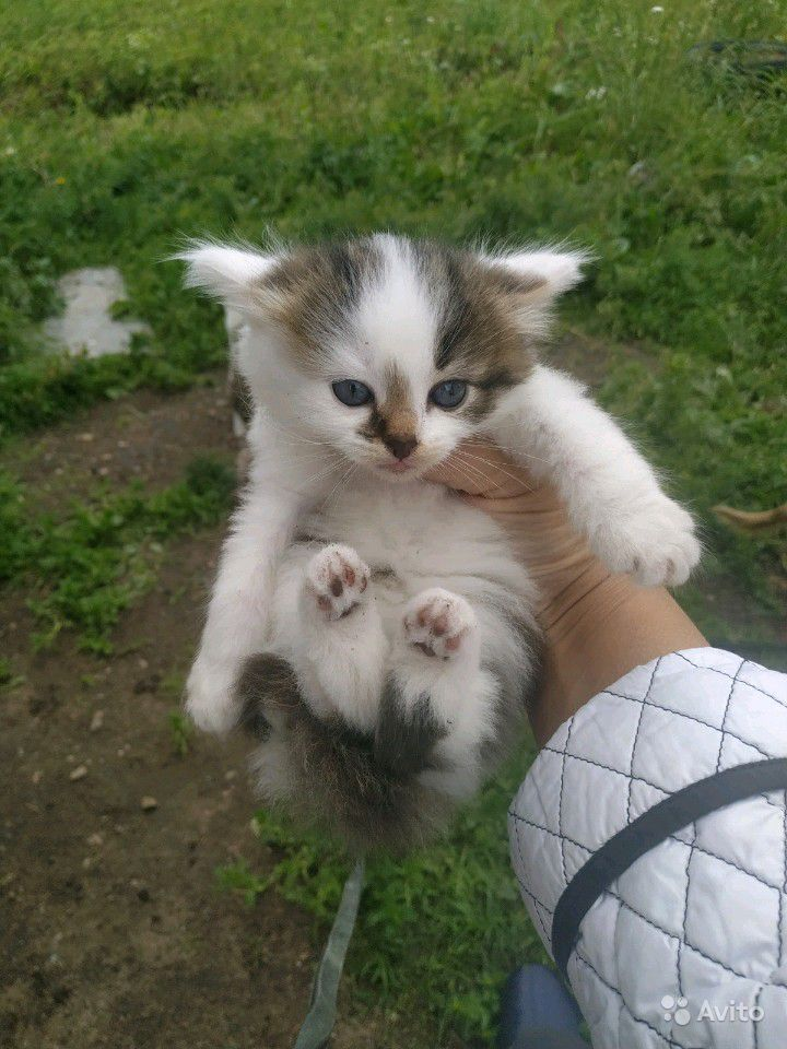 Котята в подарок в Санкт-Петербурге - фотография № 2