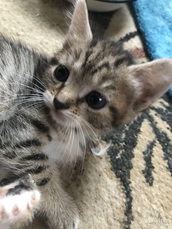 Котик в пятнышко в Твери - фотография № 3