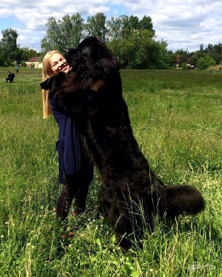 Продать щенка в Дзержинске - фотография № 6