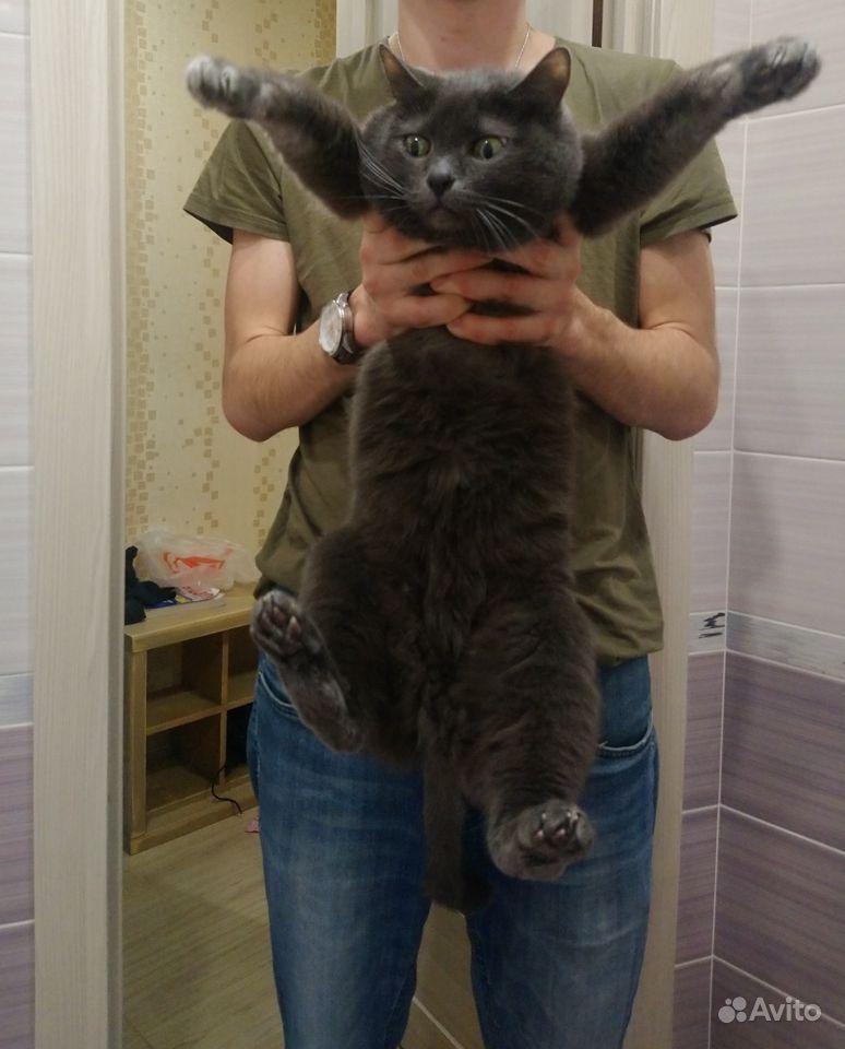 Очень смешная кошка в Саратове - фотография № 3