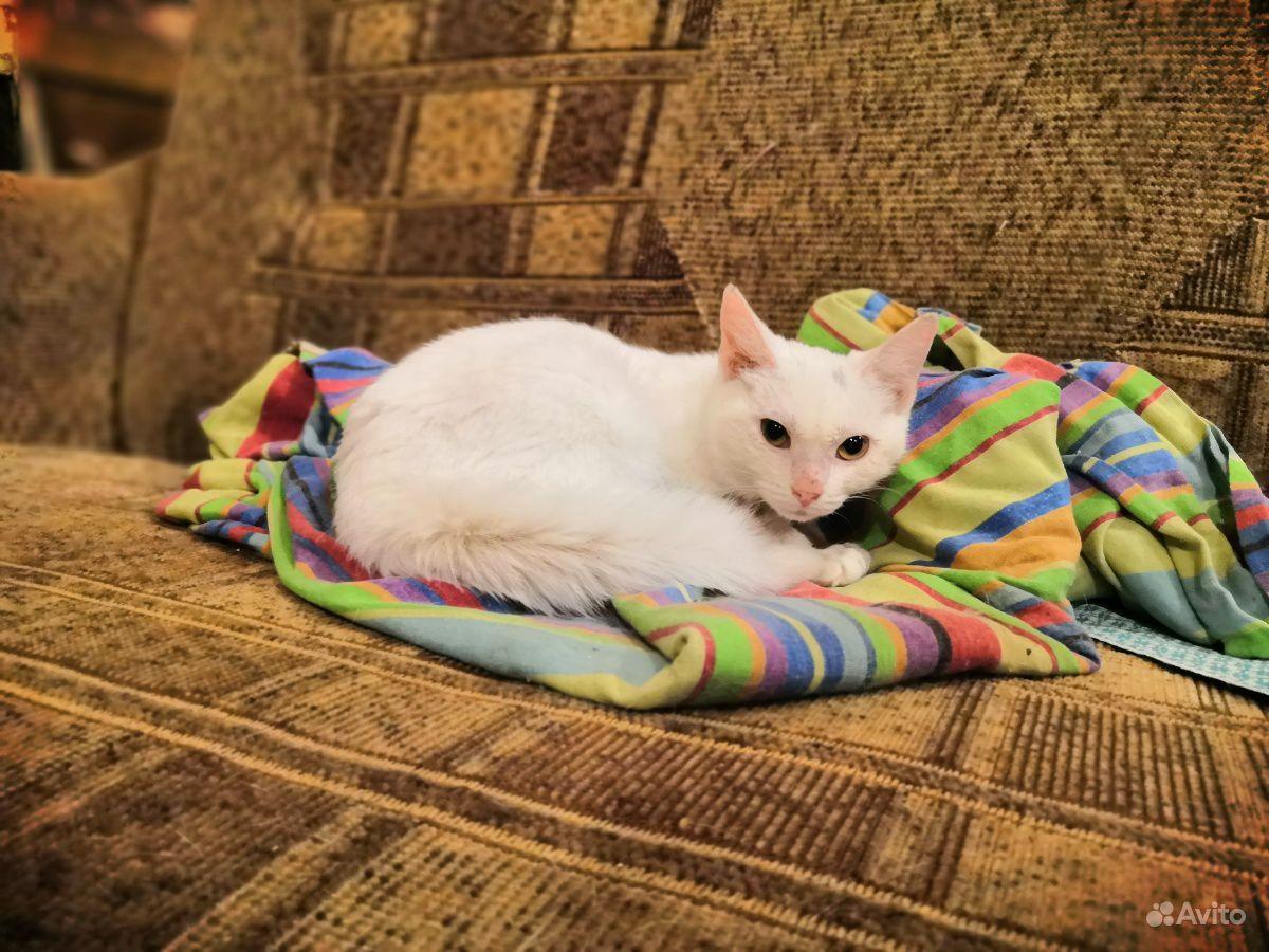 Молодая белая кошечка