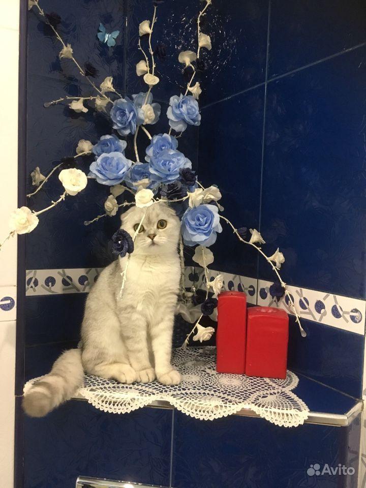 Продается Кошка - фотография № 3