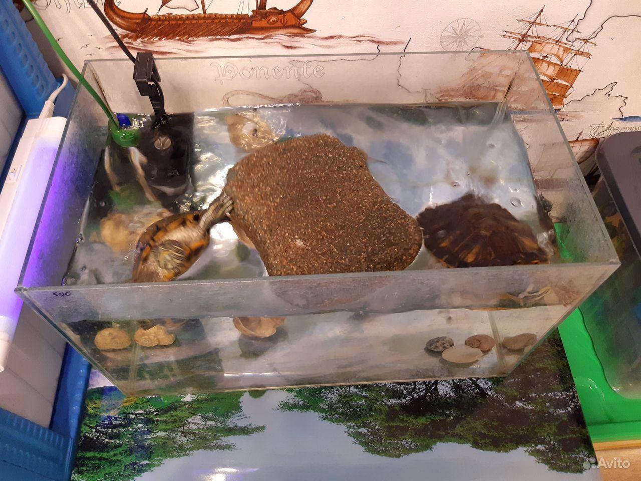 Черепахи купить на Зозу.ру - фотография № 1