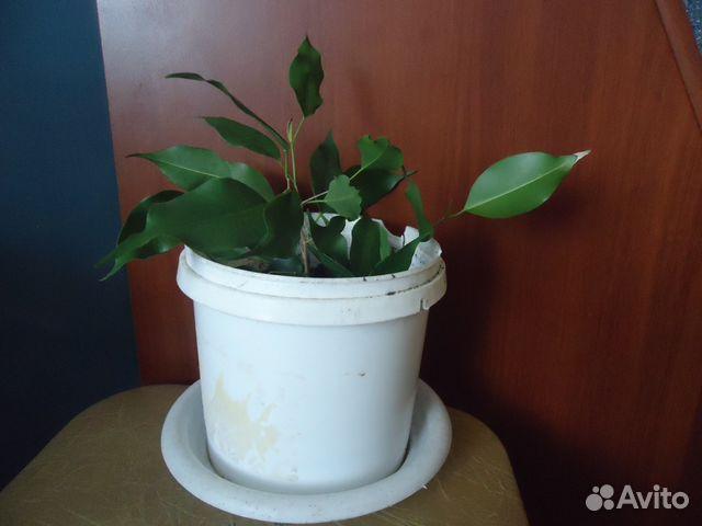 курган ру комнатные растения