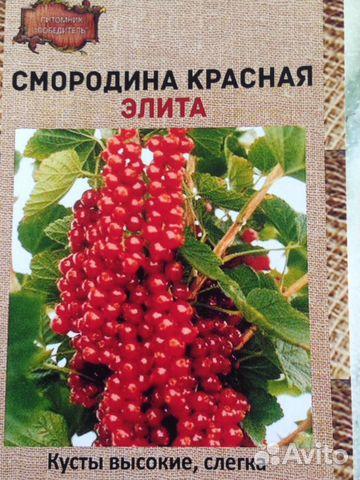 саженцы малины питомники краснодарский край
