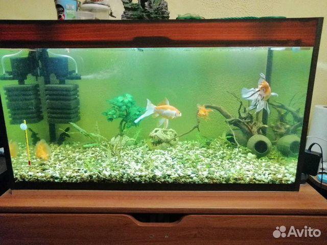 Фотосалон в аквариуме самара