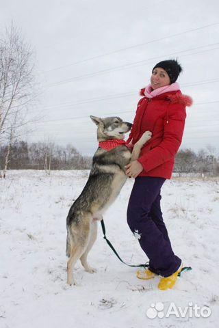 Скромняга Вульфи ищет дом купить на Зозу.ру - фотография № 3