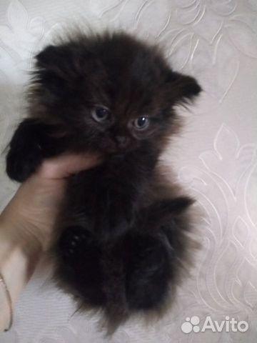 Подарю котят  купить 4