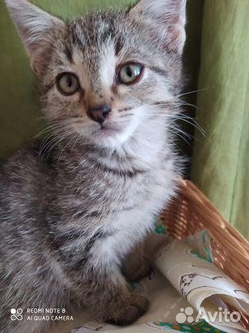 Котята ищут теплый дом  89867112072 купить 3