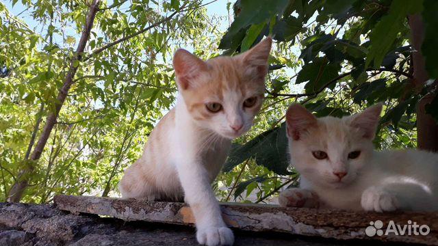 Котята в добрые руки  89787106687 купить 3