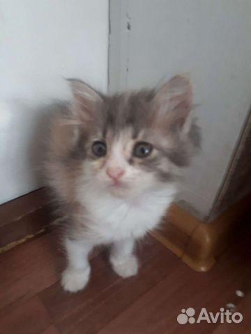 Котенки  89011211352 купить 3