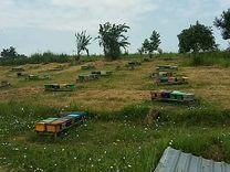 Пчеломатки
