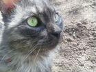Боня - волонтерский чудо-кот - длинный хвост, гото