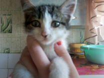 Продам котёнка в хорошие руки