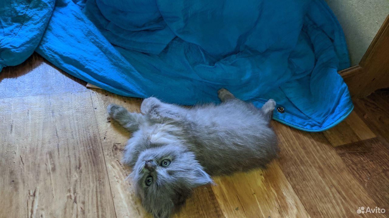 Домашние котята ждут новых хозяев