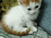 Рыжик-пыжик :) — Кошки в Геленджике