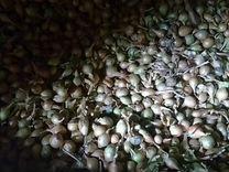 Продается лук-севок