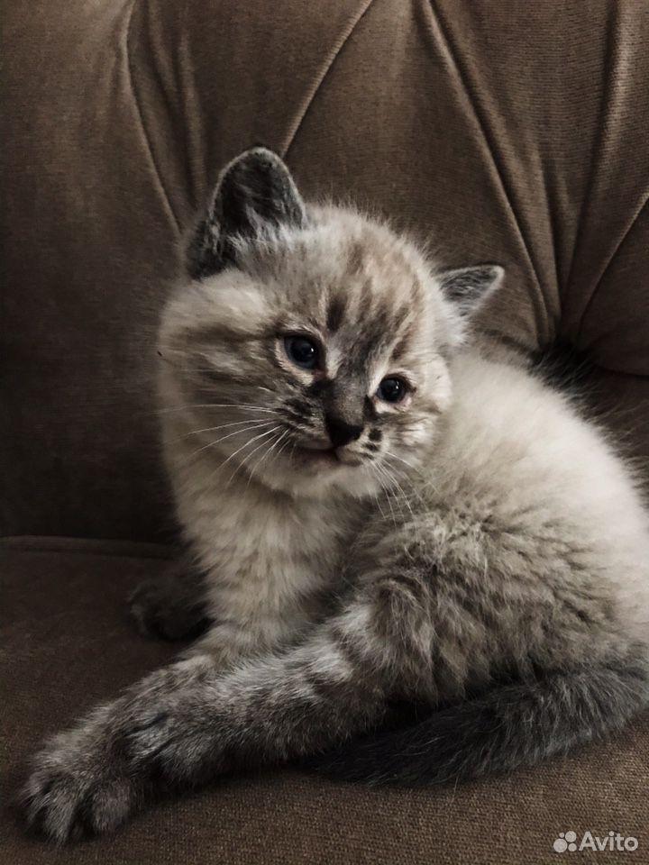 Котенок бесплатно  89507952107 купить 1