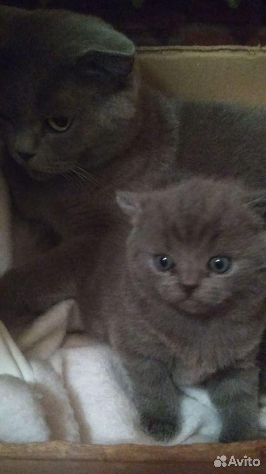 Кошки  89136104151 купить 3