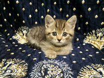 Котенок табби полосатый метис мальчик 2мес
