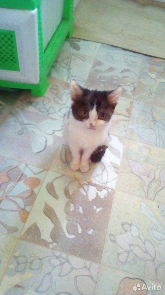 Кошка  89511582415 купить 1